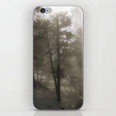 Sunlight and Fog Through Trees iPhone & iPod Skin