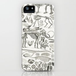 Organic Remains from A history of the earth and animated nature (1820) by Oliver Goldsmith (1730-177 iPhone Case