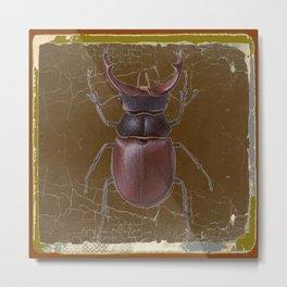 ANTIQUE STAG-HORNED BEETLE BROWN ART Metal Print