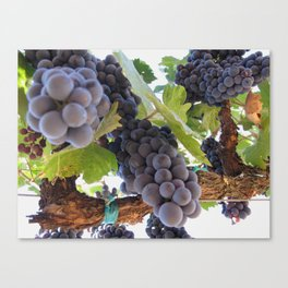 Grapes 3 Canvas Print