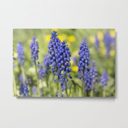 Tiny Blue Flowers Metal Print
