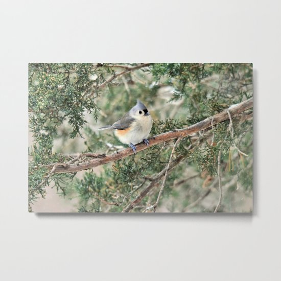 Tiny Titmouse Metal Print