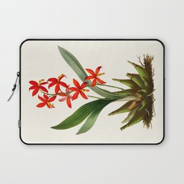 Epidendrum Selenium Vintage Scientific Botanical Flower Illustration Hand Drawn Art Laptop Sleeve