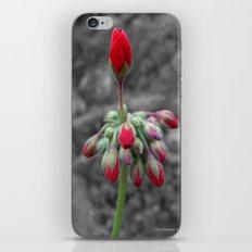 Geranium iPhone & iPod Skin