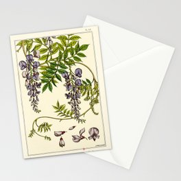 French botanical flower plate - Maurice Verneuil - Glycine Stationery Cards