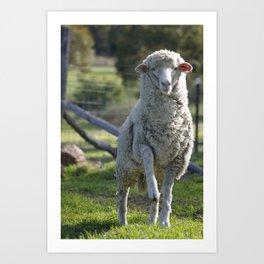 Patrick @ Happy Hooves Farm Sanctuary Australia Art Print