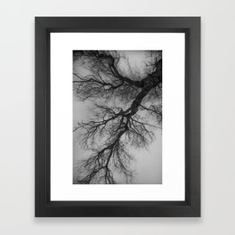 Lungs of the Earth | Nature Photography | Weeping Willow | Black and White | black-and-white | bw Framed Art Print