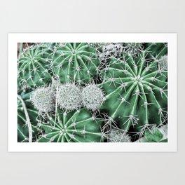Cactus Mine Field Art Print