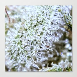 Full Trichomes Canvas Print