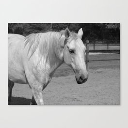 Horse In Black And White Canvas Print