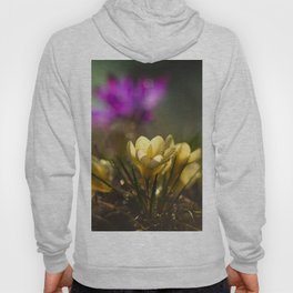 Yellow Crocuses Hoody