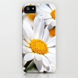 Daisy Flowers 0136 iPhone Case