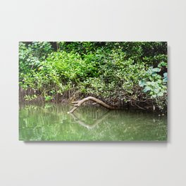 Daintree Rainforest- Reflection Metal Print
