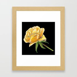 Yellow Rose on black Framed Art Print