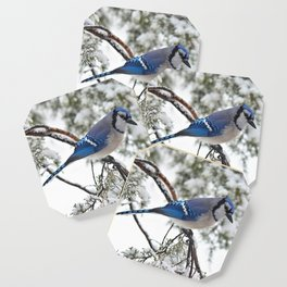 Beautiful Blue Jay Coaster