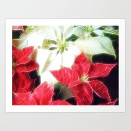 Mixed Color Poinsettias 2 Angelic Art Print
