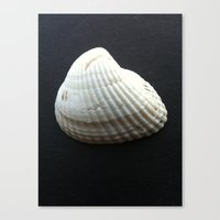 seashell Canvas Prints featuring Seashell by Yellow Barn Studio