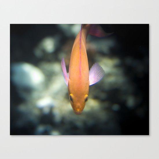 O-Fish-Al Canvas Print