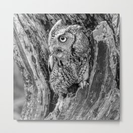 Echo the Screech Owl by Teresa Thompson Metal Print