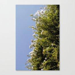 Flores y el Cielo Canvas Print