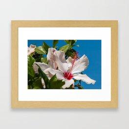 10006 Hibiscus Framed Art Print