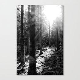 Dancing rays of light Canvas Print