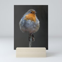robin Mini Art Print