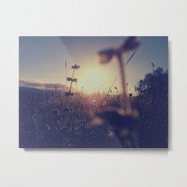 Beautiful weeds Metal Print