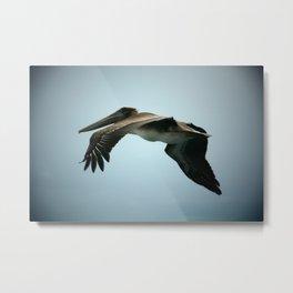 Pelican Over Galveston Bay Metal Print