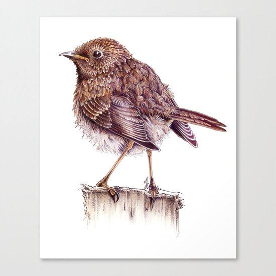 Juvenile Robin Canvas Print