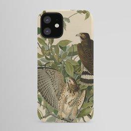 91 Broad winged Hawk iPhone Case