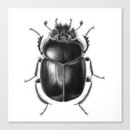Beetle 13 Canvas Print