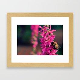 Bzzz Framed Art Print