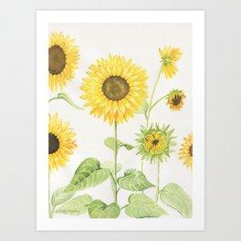 Sunflowers Garden Art Print