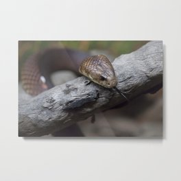 Mulga Brown Snake Metal Print