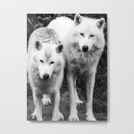 Pair of Arctic White Wolves Portrait - Black and White Animal Photography Metal Print