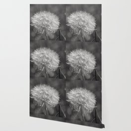 Fluffy White Seed Head Nature Lover's Gift ~ Make A Wish Wallpaper