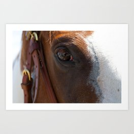 The Eye and the Horse Art Print