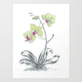 Orchid 02 Botanical Flower Art Print