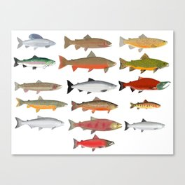Trout, Char and Salmon Group Canvas Print