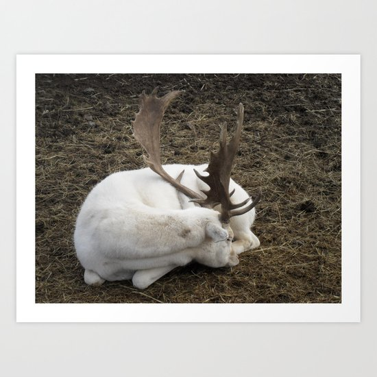 White Fallow Deer Art Print