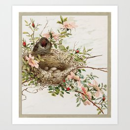 Vintage Bird with Eggs in Nest Art Print