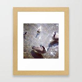 Lake Merritt Geese Framed Art Print
