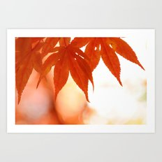 Maple Reds Art Print
