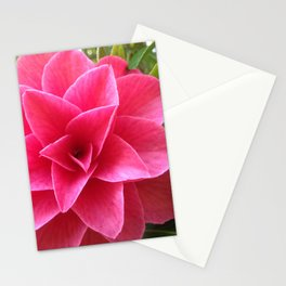 Rosé Tea Rose Stationery Cards