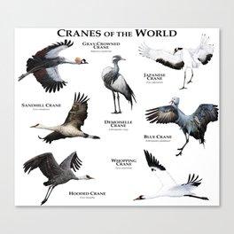 Cranes of the World Canvas Print