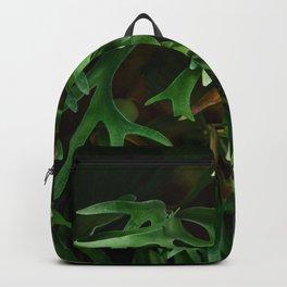 Platycerium Wallichii Hook Fern Backpack