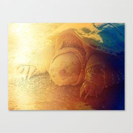 Looking Snappy Canvas Print