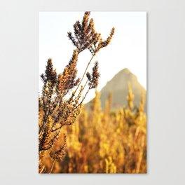 Sunset dust Canvas Print
