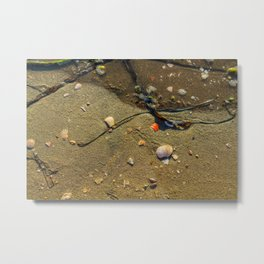 Sandy Still-life Metal Print